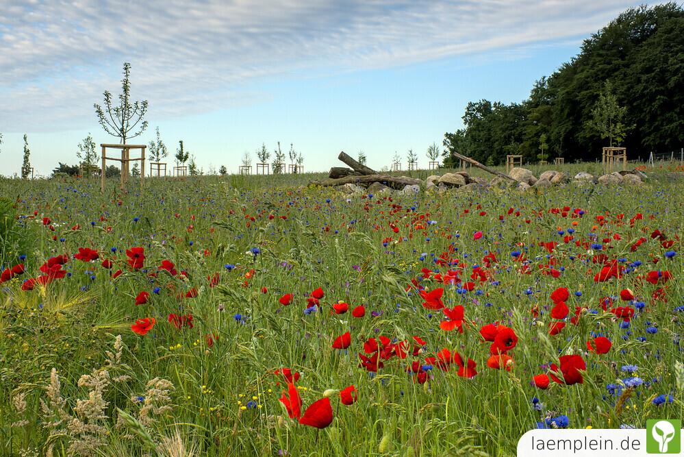Naturlehrpfad am Nonnensee